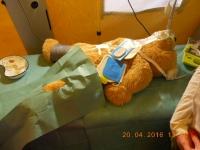 nemocnice zvířátek 006
